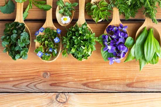 Common herbal plants in traditional medicine