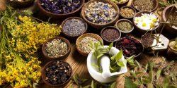 Amazing Medicinal Plants In Traditional Medicine